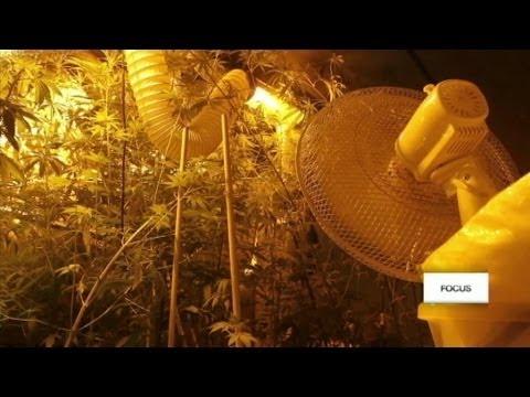 Copenhague veut gérer la distribution de cannabis - #Focus