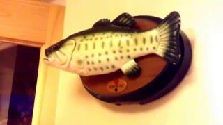 �������� ���� Singing and dancing fish ������