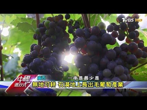 廣西石漠化危機 毛葡萄經濟'奇兵' 中國進行式 20190120
