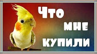 ЗООпокупки для попугаев корелл Бони и Яши.
