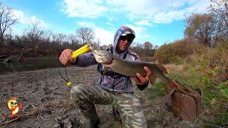 Рыбалка на реке Синий судак Зубастая Полосатый