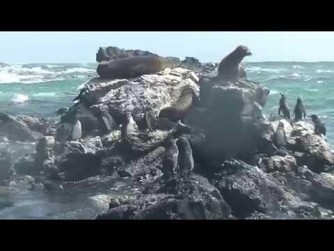 39. Isabela, Galapagos Part 1