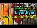 Kasih Vitamin Dari Kecil Piyik Lebih Mantap  Mp3 - Mp4 Download