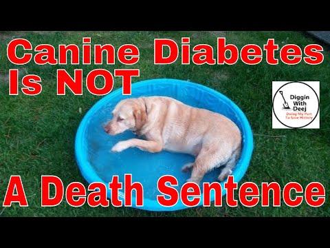 Feeding A Senior Diabetic Dog On A Budget ~ Canine Diabetes IS NOT A Death Sentence!