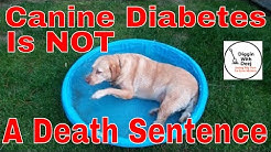 Feeding A Senior Diabetic Dog On A Budget ~ Canine Diabetes IS NOT a Death Sentence!