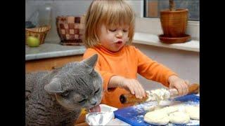 Смешные Видео Приколы с Котами Смешные Коты до Слез Смешные Животные 2019 23
