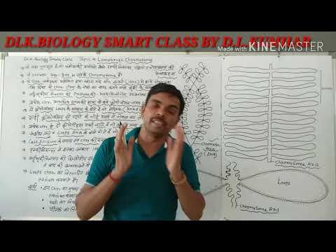 Lampbrush Chromosomes In Hindi