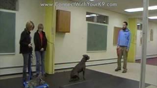 Puppy Training - Bella Learns Self Control