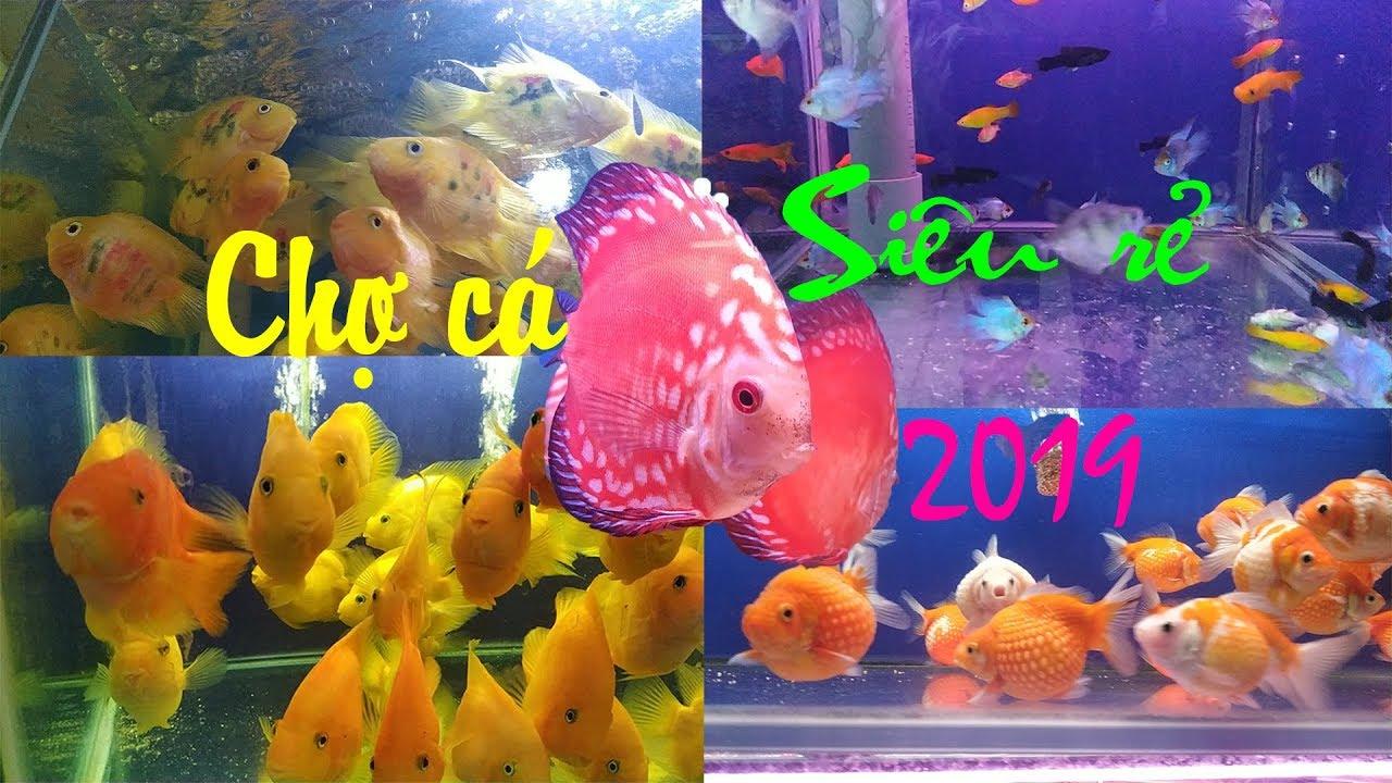 CHỢ CÁ CẢNH SIÊU RẺ, SIÊU ĐẸP ở đường Nguyễn Thông Sài Gòn 2019   Aquarium Fish Market In HoChiMinh