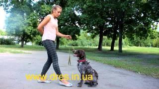 Основы дрессировки! Обучение собаки Сидеть Ждать