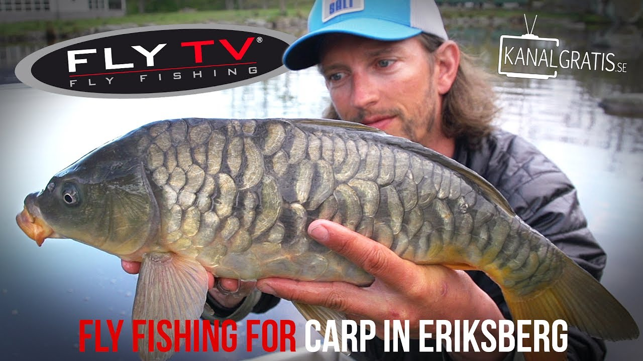 72475cd270c2f FLY TV - Fly Fishing Carp in Eriksberg - YouTube