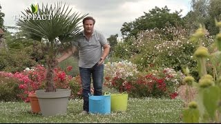 Prix olivier en pot jardiland antidiary for Comment planter un palmier en pot