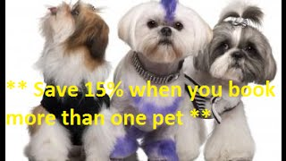 Dog Grooming San Diego - Mobile Dog Grooming Service
