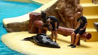 Loro Parque Sea Lion Show (1080p HD)