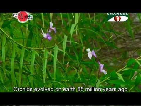 Nature and Life - Episode 88 (Orchid and Cactus)