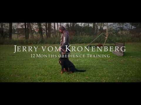 Jerry vom Kronenberg Obedience Training 12 Mth old.