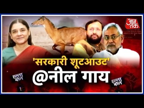 Halla Bol: 200 Nilgai Shot. Required, Says One Minister. Unacceptable, Says Another