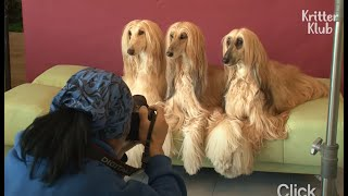 The Difference Between These Fabulous Dogs And Kardashian Family Is? | Kritter Klub