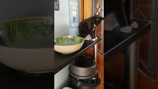 猫「落とす!」人間「やめて!」…勝負の結果は?(動画)