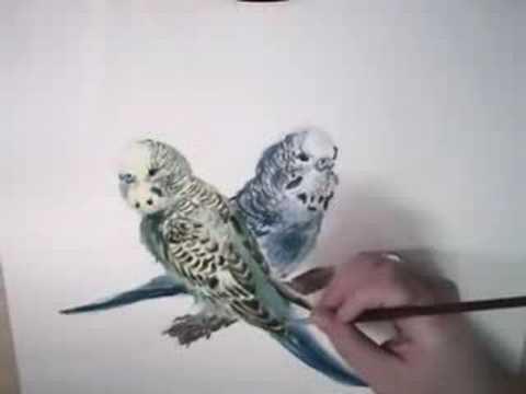TheAnimalPlace: Budgie/Parakeet Yellow & Green Bird #3653 - Hansa ...
