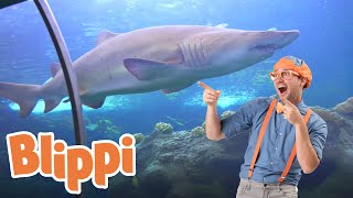 Learning Sea Animals With Blippi | 1 Hour Of Blippi | Educational Videos For Kids