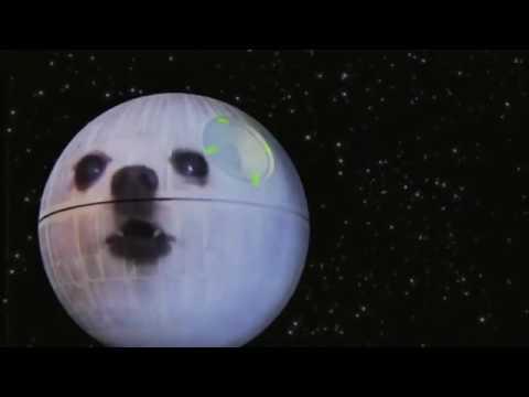 Star Wars: doge wars