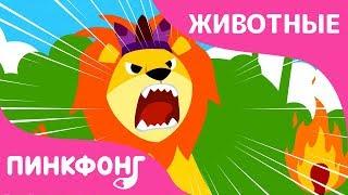 Лев | Песни про Животных | Пинкфонг Песни для Детей