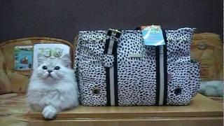 Cумка переноска для собак, кошек 166 ZooStar.com.ua