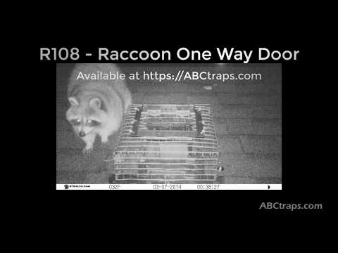 R108 - Raccoon One Way Exit Door | USA & CANADA