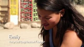 Mexico Rescue Mission - Recycled Dog Rescue
