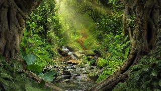 자연의소리 - 머리를 맑게 하는 계곡물소리 새소리