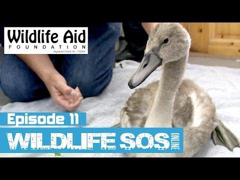 Wildlife SOS Online  Episode 11