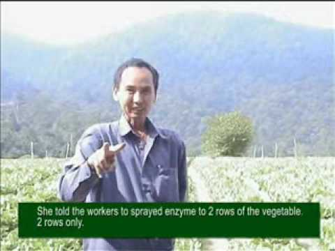 Eco Enzyme In Agriculture 03