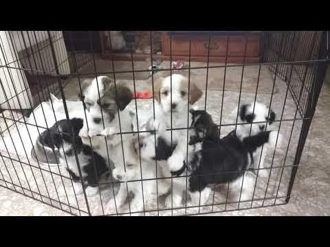 PuppyFinder.com : Pick me pick me