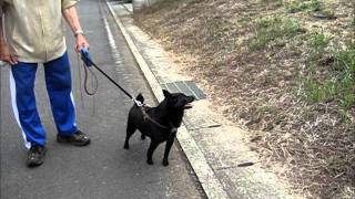 大好きな柴犬のマリちゃんと、楽しい一時を過ごそうとしているのだが・・・