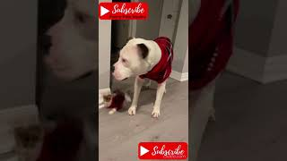 😂 TRY NOT TO LAUGH | Funny cat fails 2021 | dog fails | people fails | Epic Tntl 😹 #shorts
