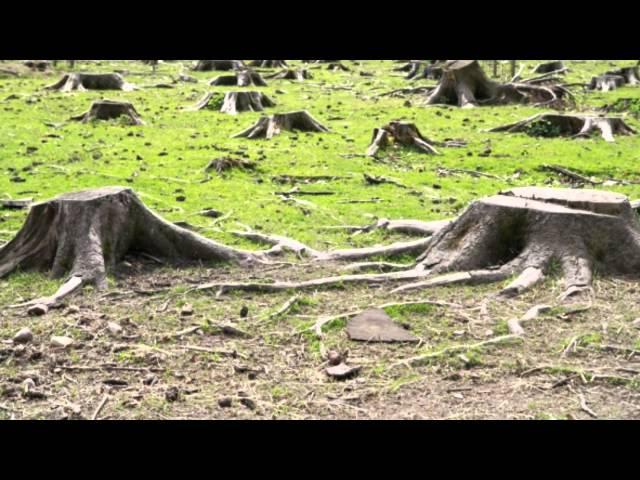 Deforestation Inspirational Video