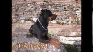 Rottweilers Community Portal Family !!!!!