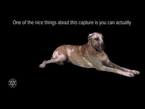 Creating a Dog Hologram - Volumetrically Capturing a Truly Great Dane