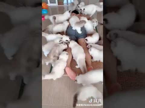 Cat Series: When many cats attack you