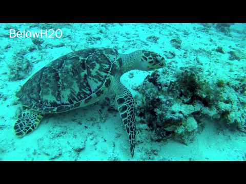 Cozumel Dive Trip Nov. 2012 | BelowH2O
