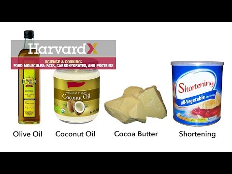 Food molecules: fats, carbohydrates, and proteins