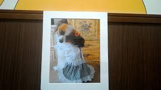 1にしました。愛犬がモデル出演して 左むきになってくれています(笑)
