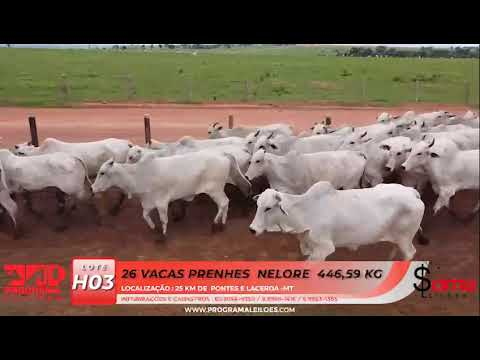 LOTE H03