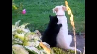 ЭТИ  разные кошки!ПОДБОРКА ВИДЕО ПРИКОЛОВ О ЖИВОТНЫХ!