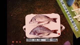 磯釣の釣果はムラが大きく、初心者にはボーズ・空振が多い。 確実にサシ...