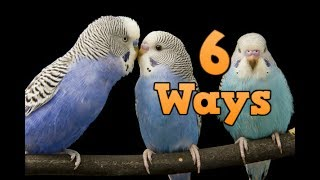 How to keep your bird happy! 6 ways to keep your budgies happy