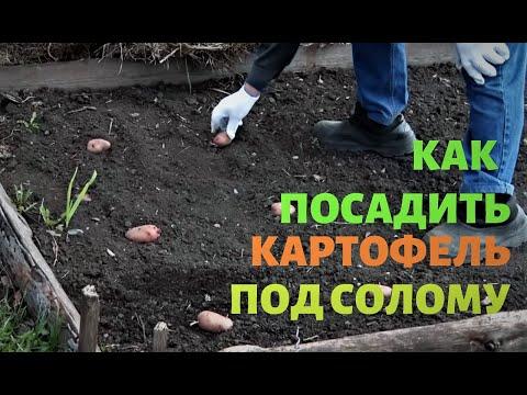 Как садить картошку в солому видео