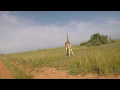 Big Five Safaris - Uganda, Africa