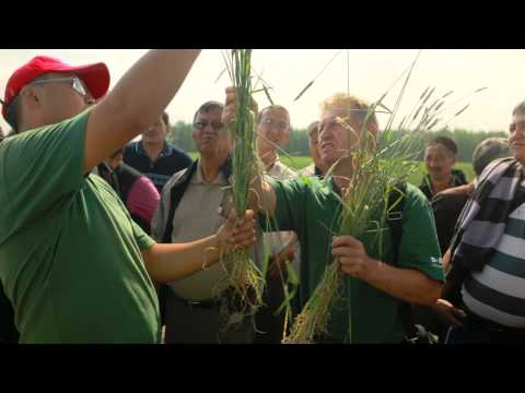 World of Wheat: USAID Food Security video about wheat in Central Asia